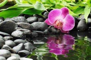 10532871-concept-de-spa-avec-pierres-zen-et-orchidee-2